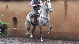 In Messico i cavalli sanno anche ballare