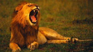 Delfino, leone, orso o lupo? Scopri il tuo ritmo animale per vivere alla grande