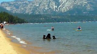 Ospiti a sopresa: mamma orsa e due cuccioli fanno il bagno con i turisti