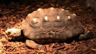 Ritrovano la tartaruga viva in soffitta dopo averla persa nel 1982