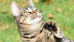 Arriva il patentino per gattari: boom di richieste