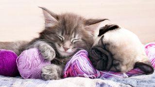 Sogni da cani (e gatti): i nostri animali domestici ci pensano anche nel sonno