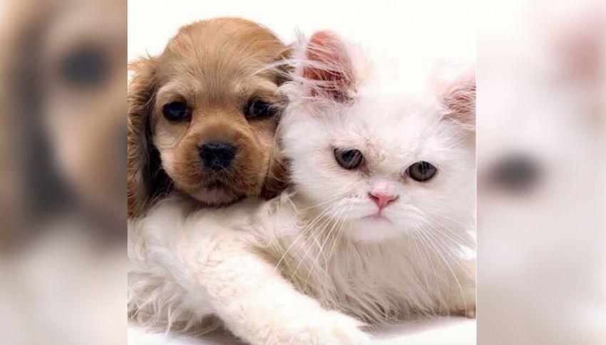 Cani e gatti fanno bene alla coppia. Lo dice la scienza