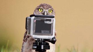 Pose bestiali: le foto più divertenti con gli animali protagonisti