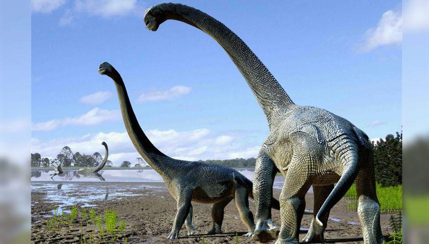 Scoperta nuova specie di dinosauro in Australia: era alto 6 metri