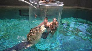 La gabbia della morte, un'esperienza estrema tra i coccodrilli
