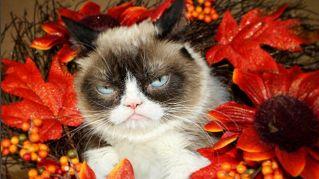 I gatti idoli di Instagram: ecco i felini con migliaia di followers