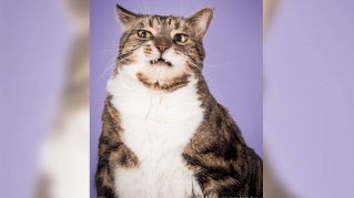 Fat cats: il fotografo che ritrae solo gatti grassi