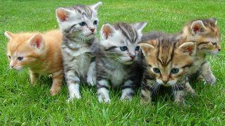 9 app che faranno impazzire di gioia il vostro gatto, per iPad e tablet Android