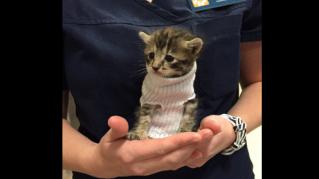 Il gattino nel calzino, il lieto fine di un cucciolo salvato dall'uragano