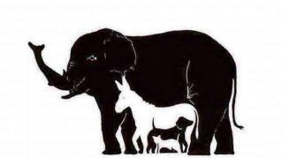 Quanti animali ci sono in questa immagine? La risposta è difficile!