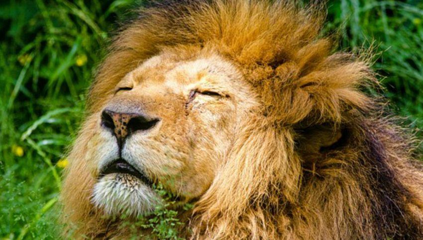 I 10 animali più pericolosi del mondo