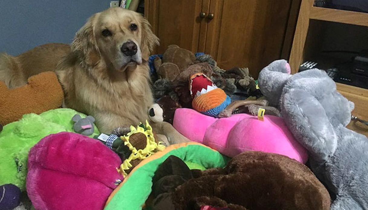 Mojito, la cagnolina giocherellona: ogni notte a cuccia con un peluche nuovo