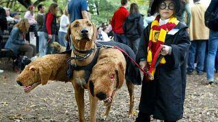 Arriva Halloween: a New York anche i cani sfilano mascherati