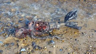 Le sirene esistono: trovata una morta sulla spiaggia di Great Yarmuth