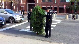 La sfortunata performance dell'uomo-albero finisce in arresto
