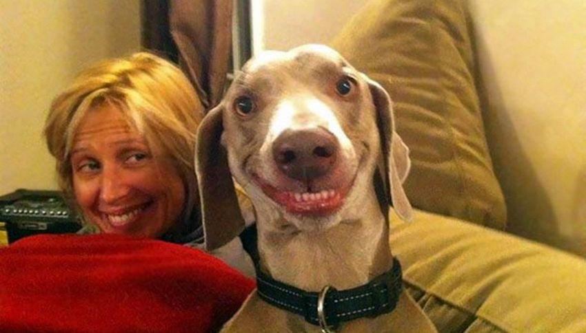 Sorridi! Quando i nostri animali sono (davvero) poco fotogenici