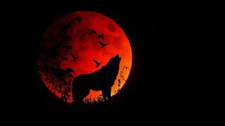 Ammalati, insonni e cani ululanti, la luna piena ci fa davvero impazzire?