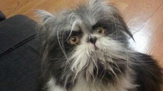 Cane o gatto? La nuova star del web fa discutere tutti