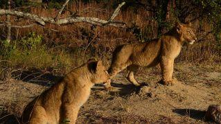 Due terzi degli animali selvaggi scompariranno entro il 2020, annunciata l'estinzione di massa