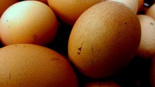 Come conservare l'albume delle uova