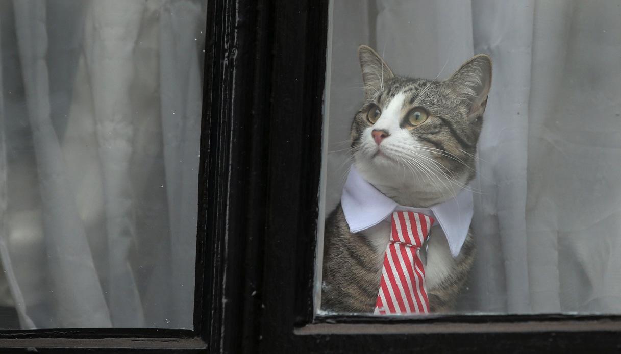 Il personaggio pop del momento: James, il gatto di Julian Assange