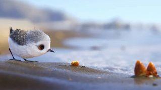 Piper, il nuovo corto Disney Pixar è bellissimo