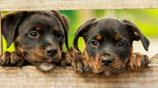 Quanto costa mantenere un cane?