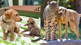 Prima e dopo: le foto dei cuccioli-amici cresciuti insieme