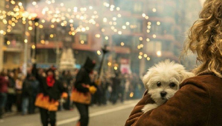 Botti di Capodanno: consigli per cani e gatti
