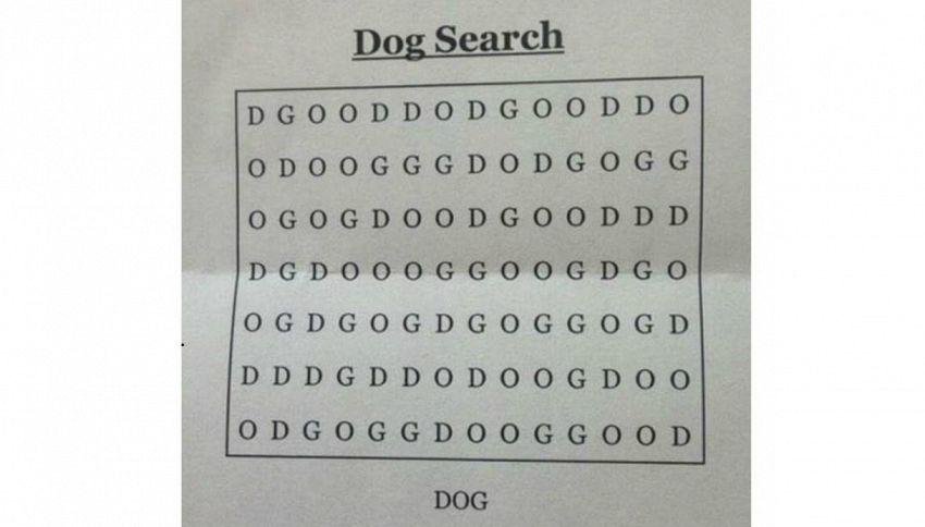 E' il quiz del momento: dove è nascosto il cane?