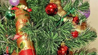 Accende l'albero e scopre un serpente tigrato tra le decorazioni