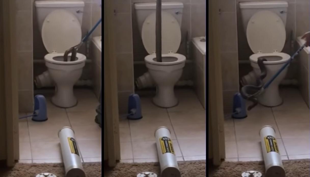 Sudafrica: il cobra spunta dal wc e crea il panico