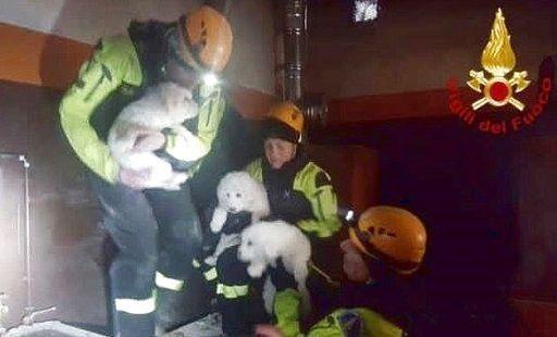Salvati 3 cuccioli di pastore abbruzzese tra le macerie del Rigopiano