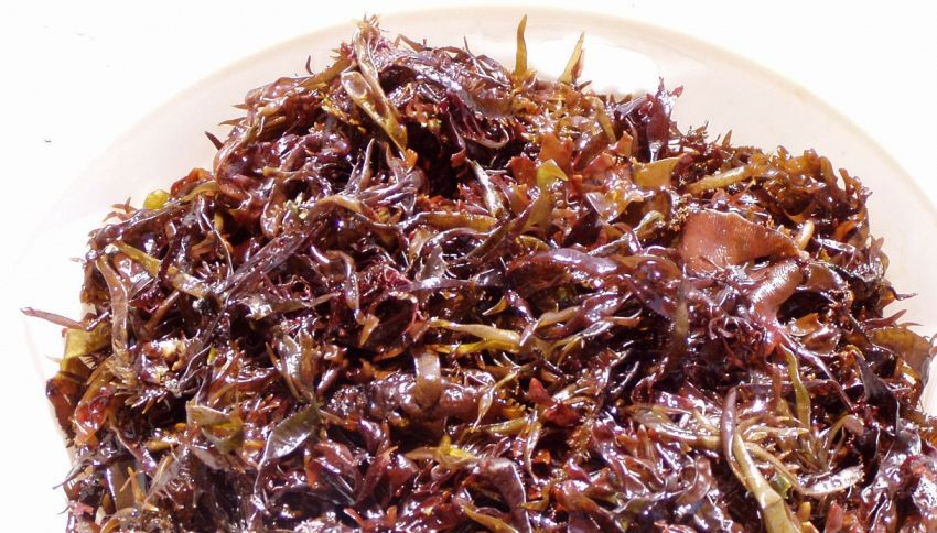 Dalle alghe rosse agli insetti, i 17 super cibi del 2017