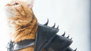 Carnevale si avvicina, ecco un'armatura fantasy per gatti