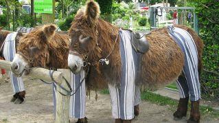 Gli asini in questa piccola isola francese girano in pigiama
