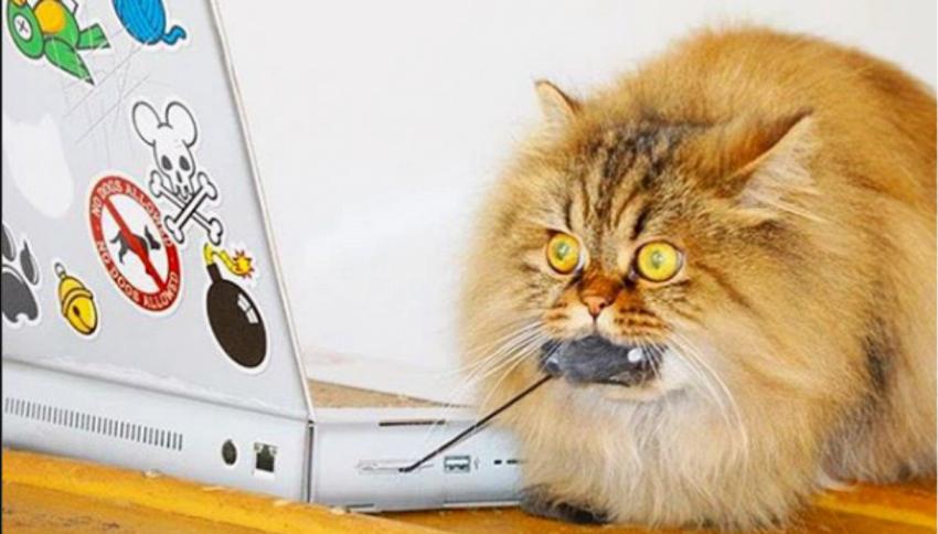 Fate giocare il gatto con computer, aerei, giradischi..in cartone