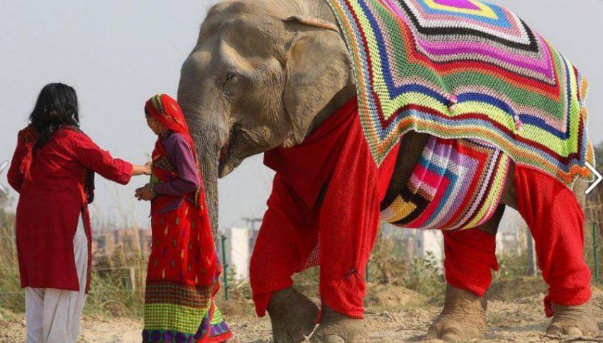 Lavorate a maglia? Provate a fare un maglione per elefanti