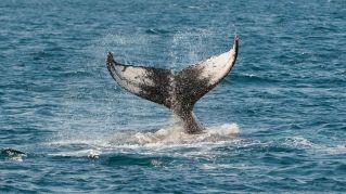 Il progetto del corridoio per i cetacei tra Catalogna e Baleari