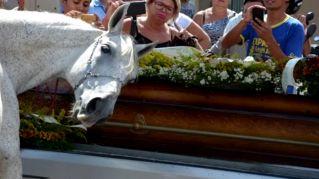 Il cavallo piange sulla bara del suo padrone. Straziante