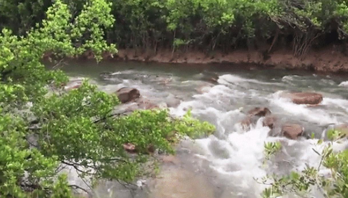 Enorme coccodrillo mimetizzato nel fiume. Riuscite a vederlo?