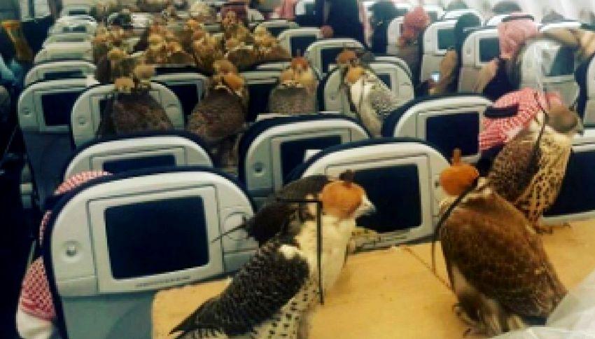 Sceicco compra 80 biglietti aerei per volare con i suoi falchi