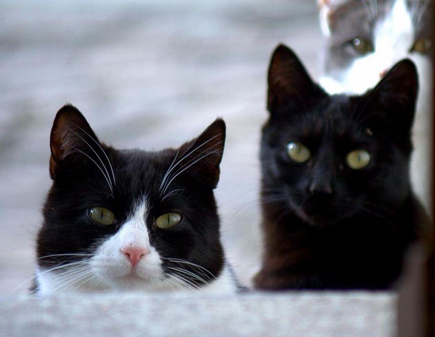 "Perchè si dice ""non c'è trippa per gatti""?"