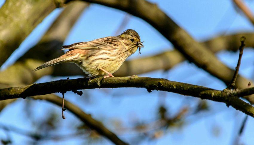 Cos'è l'influenza aviaria e quali sintomi la caratterizzano?
