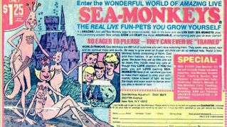 La vera storia delle scimmie di mare