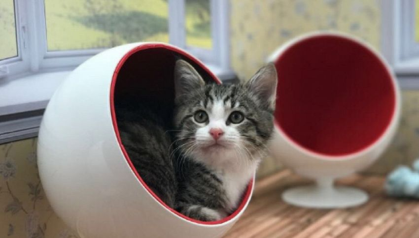 In Islanda il reality dei gatti in cerca d'adozione