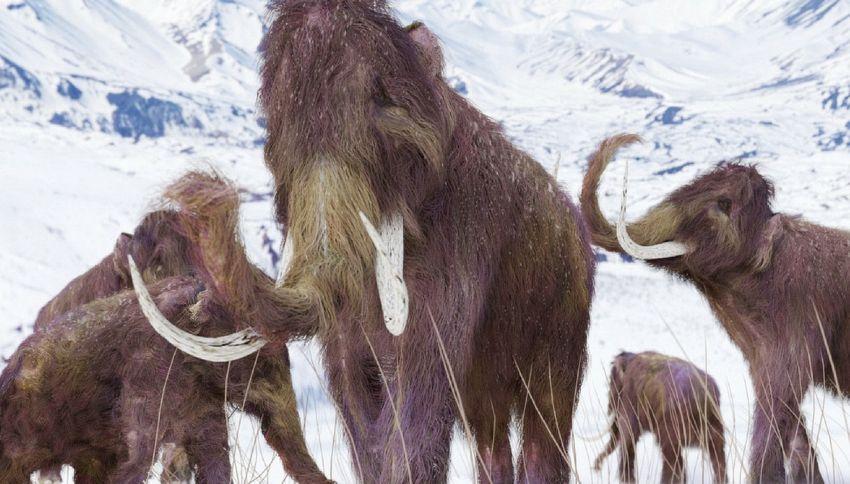 Il mammut estinto 4mila anni fa è pronto a ritornare in vita