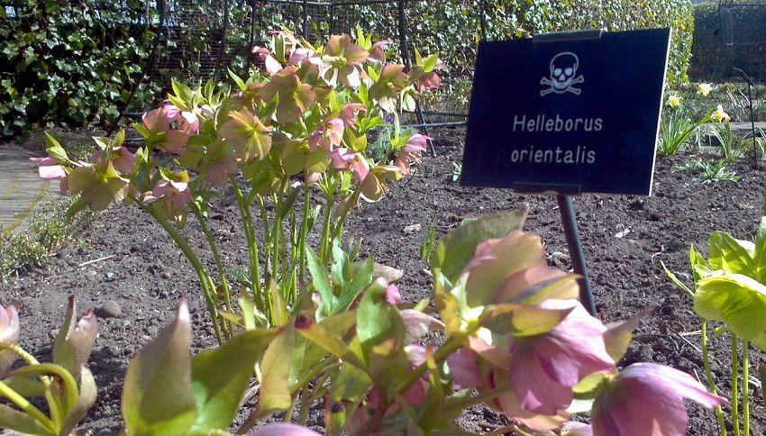 Benvenuti nel giardino più velenoso del mondo