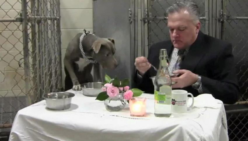 Veterinario mangia in gabbia con cane traumatizzato per curarlo